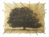 Fagus 1 by Buckmaster-French, Artist Print