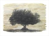 Olea europea by Buckmaster-French, Artist Print, Etching on olive leaves
