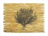 Salix by Buckmaster-French, Artist Print